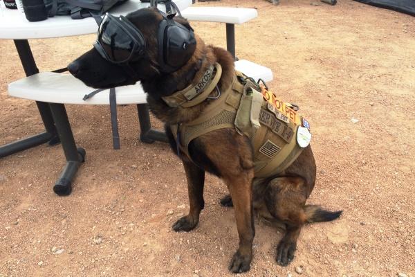 Military Service Dog Equipment