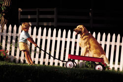 Young child pulls a wagon with his dog.