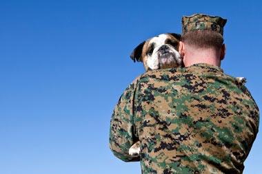 gi holds dog 380x253