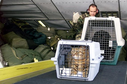 pets being transported