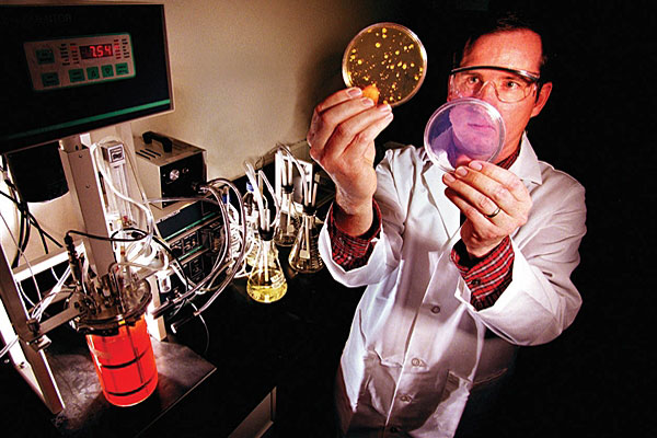 Sandia National Laboratory researcher Mark Tucker examines two petri dishes in 1999. On the left is one with a simulant of anthrax growing in it. Photo by Randy Montoya, courtesy of Sandia National Laboratory