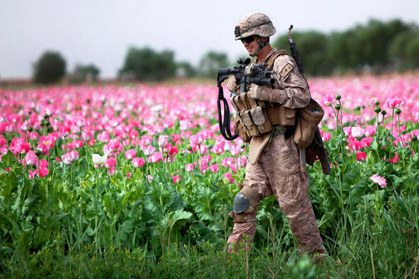 A recent report says the Taliban is winning the drug war in Afghanistan despite U.S. troops' efforts to eradicate poppy fields.