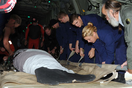 Manatee with Coast Guard 428x285