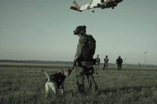 Military working dog on mission 600x400