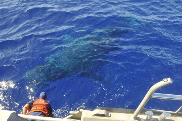 Whale 600x400