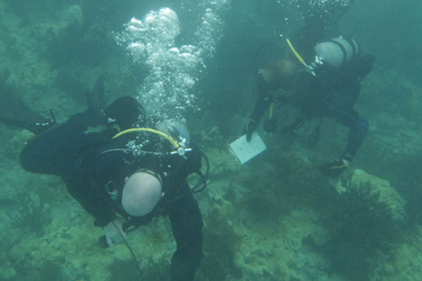 Coast Guard divers 600x400