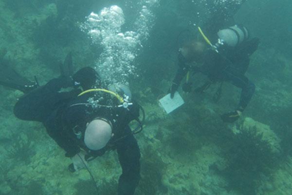 Coast Guard divers 600x400