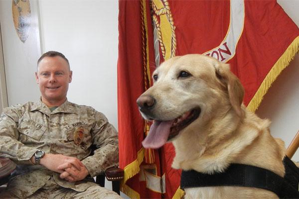 Retired IED dog Dixie 600x400