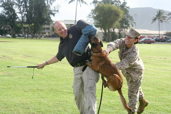 military working dog demonstration 600x400