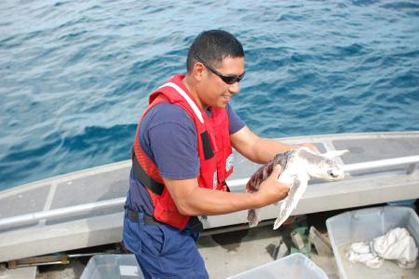 Coast Guard releases endangered turtle 600x400