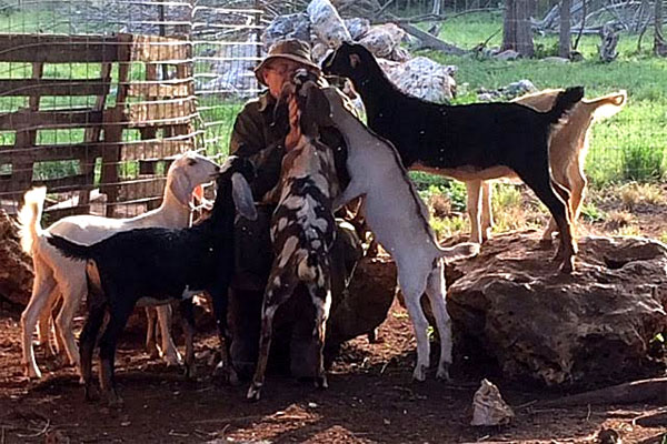 Robert Ragels sits at his farm in Texas, encircled by some of his 40 therapy goats. (Photo courtesy Robert Ragels)