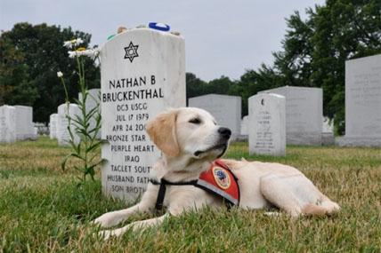 coast guard service dog